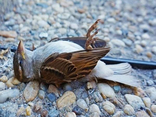 Mơ thấy chim chết có điềm báo gì và đánh con nào trúng?