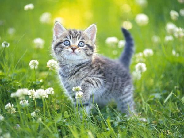 Mơ thấy con mèo đánh con gì? Là hung hay cát
