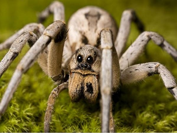 Mơ thấy con nhện có điềm báo gì và đánh số nào trúng?