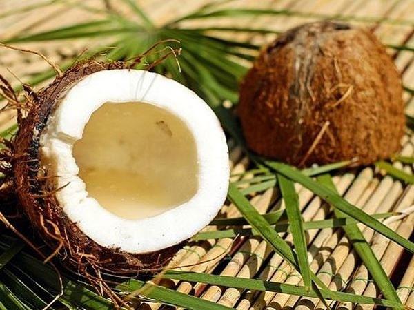 Mơ thấy quả dừa có điềm gì? Nằm mộng thấy dừa đánh số nào?