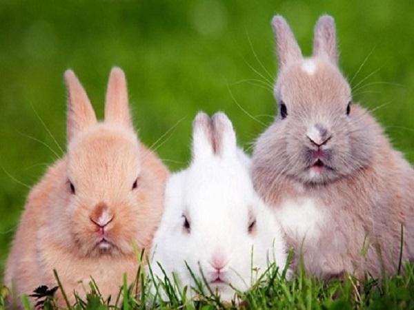 Mơ thấy thỏ có điềm gì? giải mã giấc mơ thấy con thỏ?