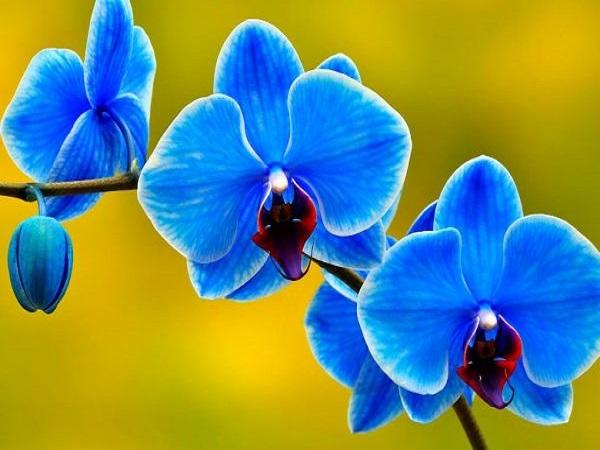 Mơ thấy hoa lan có điềm báo gì và đánh con số mấy?