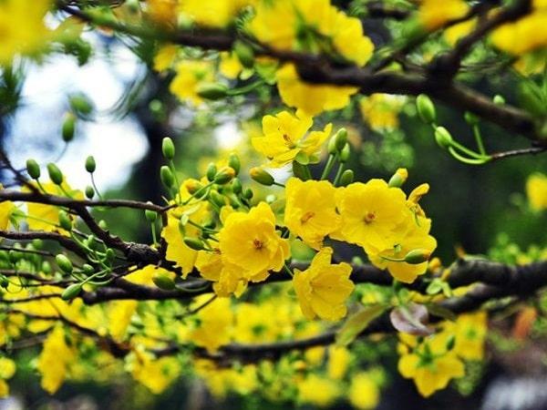 Ngủ mơ thấy hoa nở điềm gì?