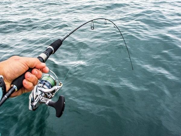 Mơ thấy câu cá đánh con gì và có điềm báo gì không?