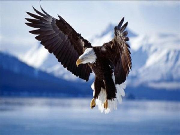 Mơ thấy chim ưng điềm báo gì và đánh con số nào trúng?