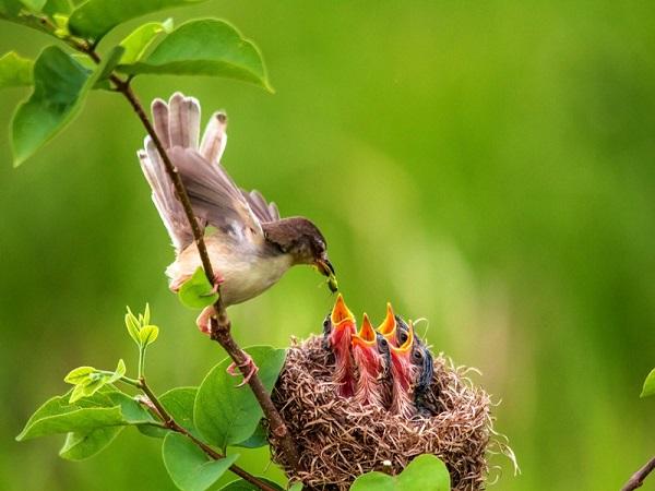Mơ thấy tổ chim có điềm báo gì và đánh con số nào may mắn?